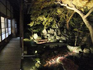 11月26日(日) 夜公演にて紅葉まっさかりの庭をライトアップしました