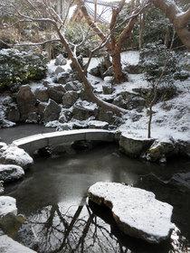 雪が庭の別の顔を見せてくれる
